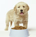 golden-retriever-puppy-food-dish